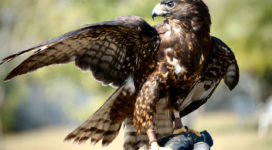 5 Sales Enablers Every Sales Manager Should Watch Like a Hawk