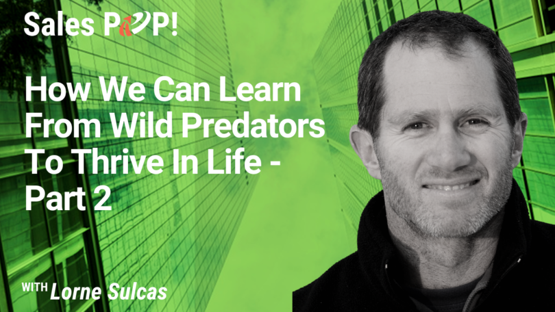 How We Can Learn From Wild Predators To Thrive In Life – Part 2